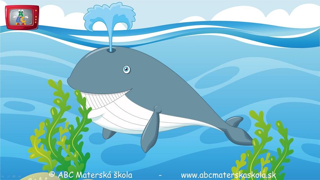 rozprávky, príbehy pre deti, vzdelávací príbeh pre deti, veľryba, vorvaň tuponosý, najväčšie zviera